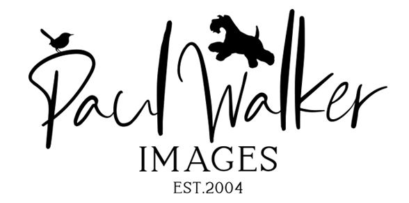 Paul Walker Wedding Photographer