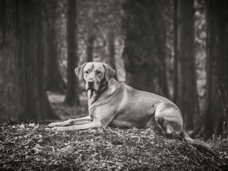 Award winning pet photography in Scotland from Paul Walker for your dog, cat or horse